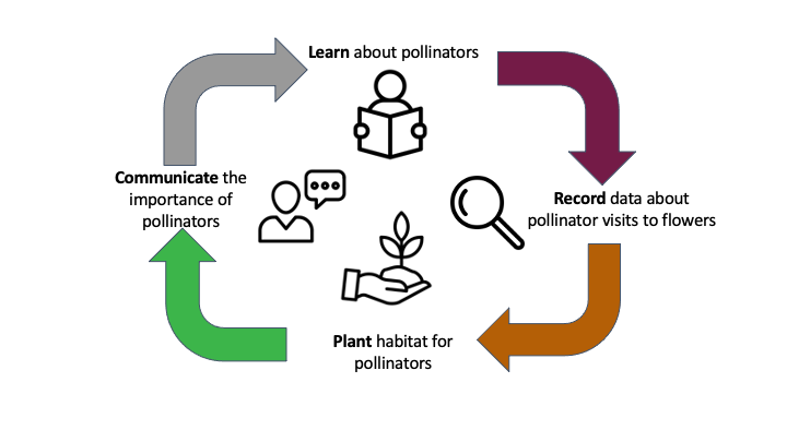 Actionable Citizen Science cycle